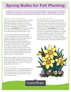 Spring Bulbs for Fall Planting