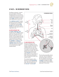 cf facts — the respiratory system