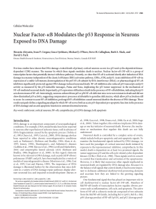 Nuclear Factor-κB Modulates the p53 Response in Neurons