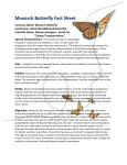 Monarch Butterfly Fact Sheet - Mid