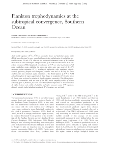 Plankton trophodynamics at the subtropical convergence, Southern