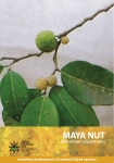 Maya Nut - Yucatan Adventure