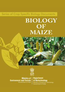 3. maize - dbtbiosafety.nic.in