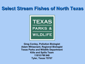 Select Stream Fishes of North Texas