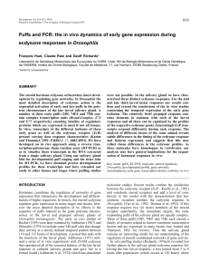 Puffs and PCR: the in vivo dynamics of early gene