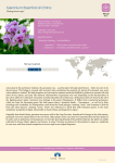 Fiche produit Geranium Essential oil China