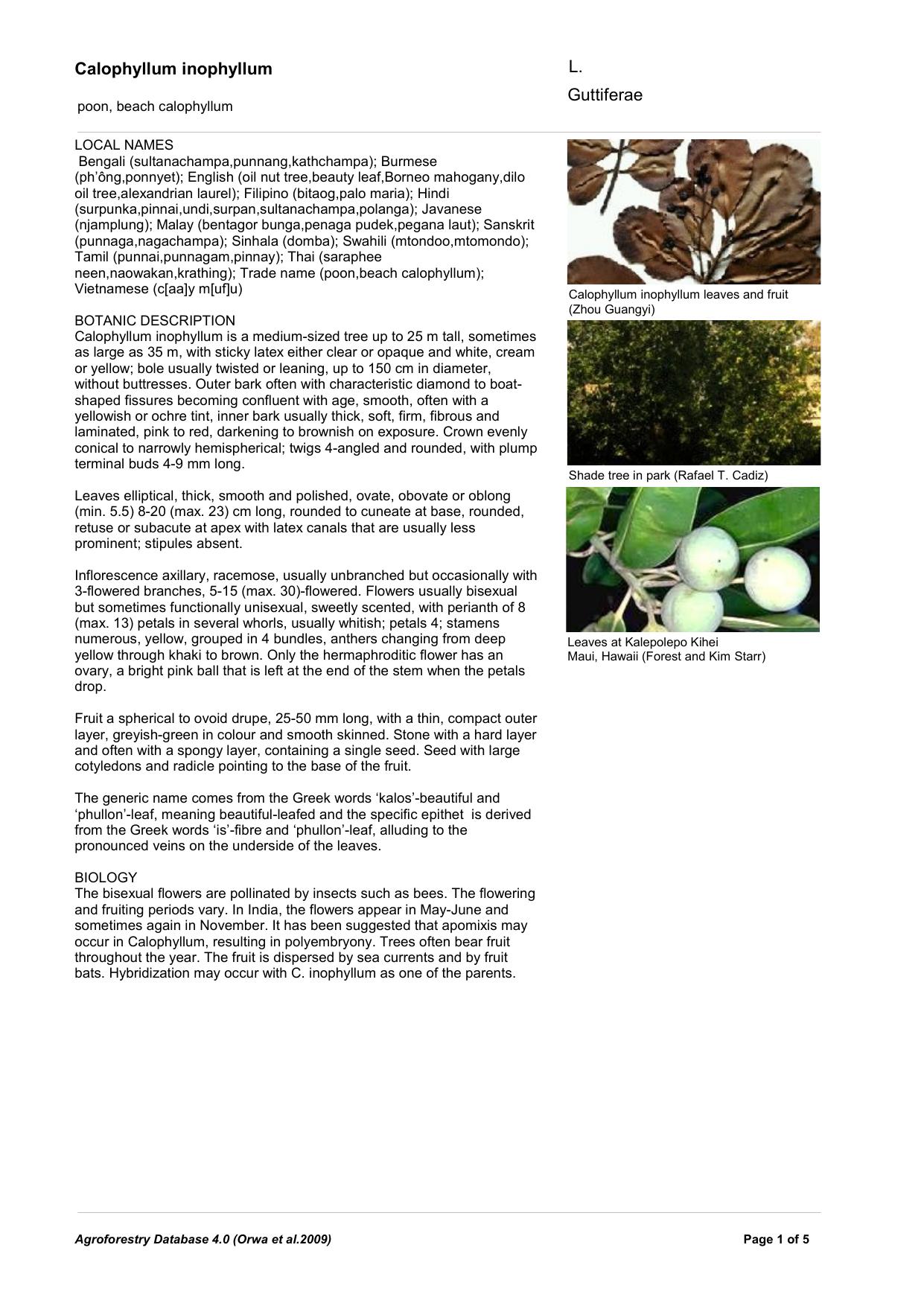 Calophyllum Inophyllum World Agroforestry Centre