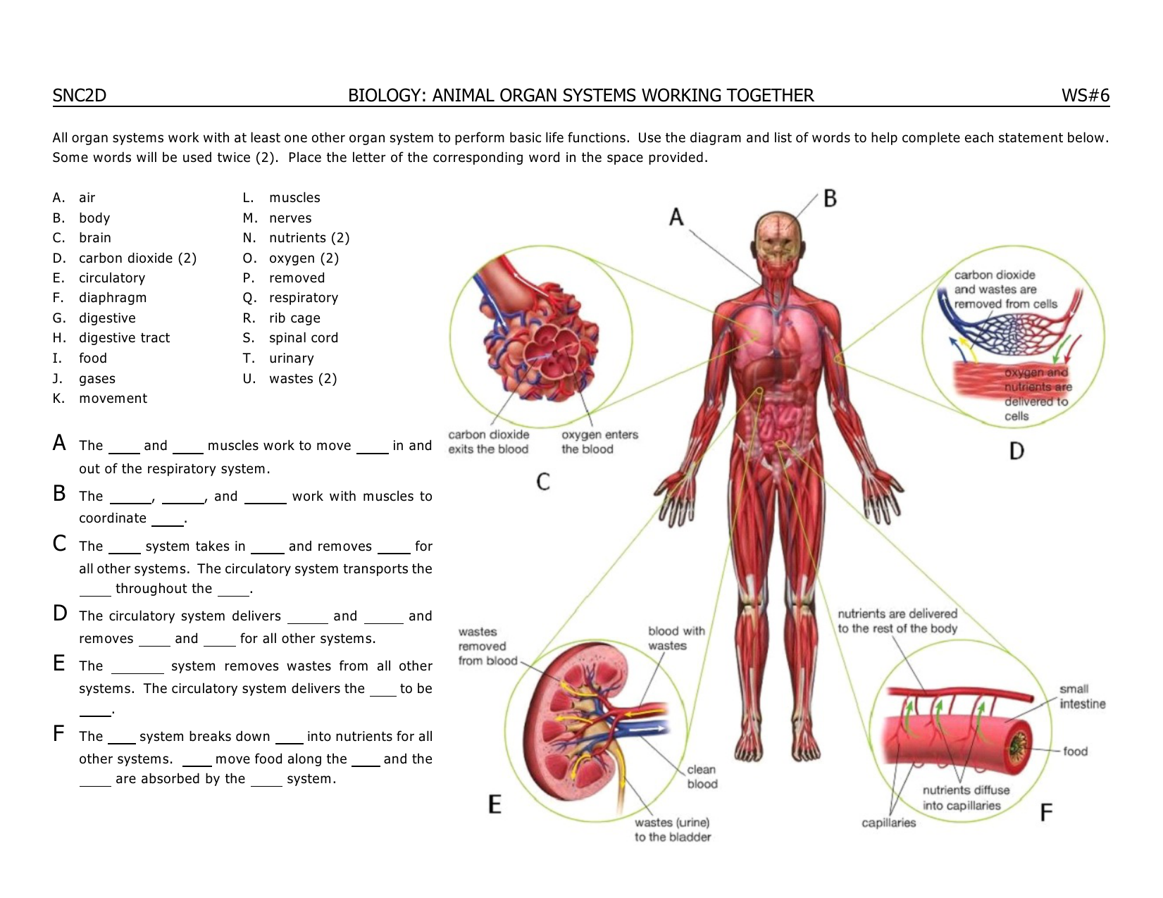 Body Systems Diagram With Words Great Installation Of Wiring Diagram