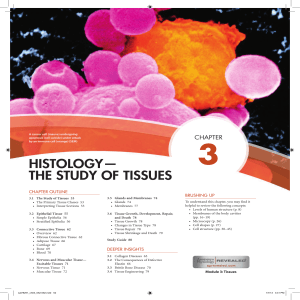 HISTOLOGY— THE STUDY OF TISSUES