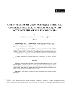 2-a new species of zephyranthes