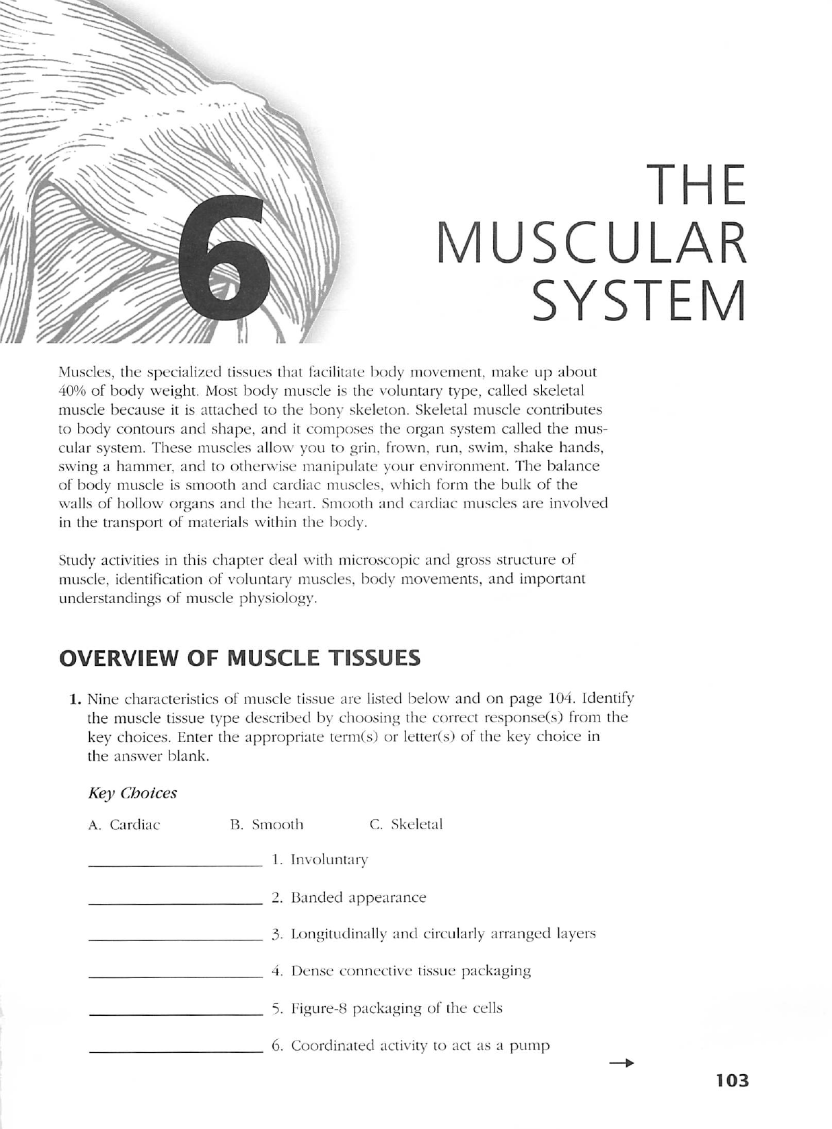 anatomy and physiology coloring workbook chapter 6 answers the muscular system coloring page. Black Bedroom Furniture Sets. Home Design Ideas