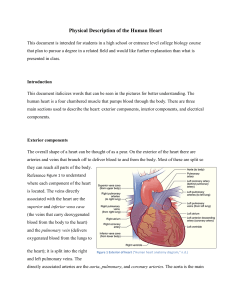 Physical Description of the Human Heart