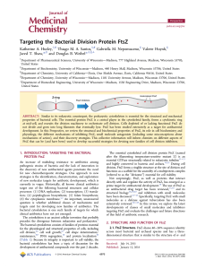 Targeting the Bacterial Division Protein FtsZ