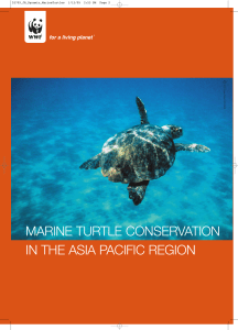 marine turtle conservation in the asia pacific region