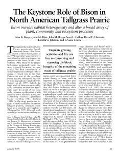 The Keystone Role of Bison in North American Tallgrass Prairie