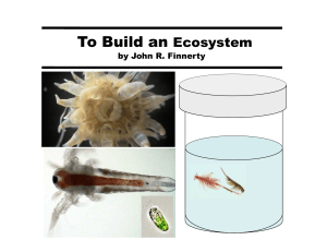 To Build an Ecosystem