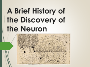 A Brief History of the Discovery of the Neuron Based on the History