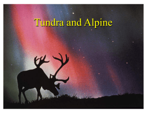 Tundra and Alpine