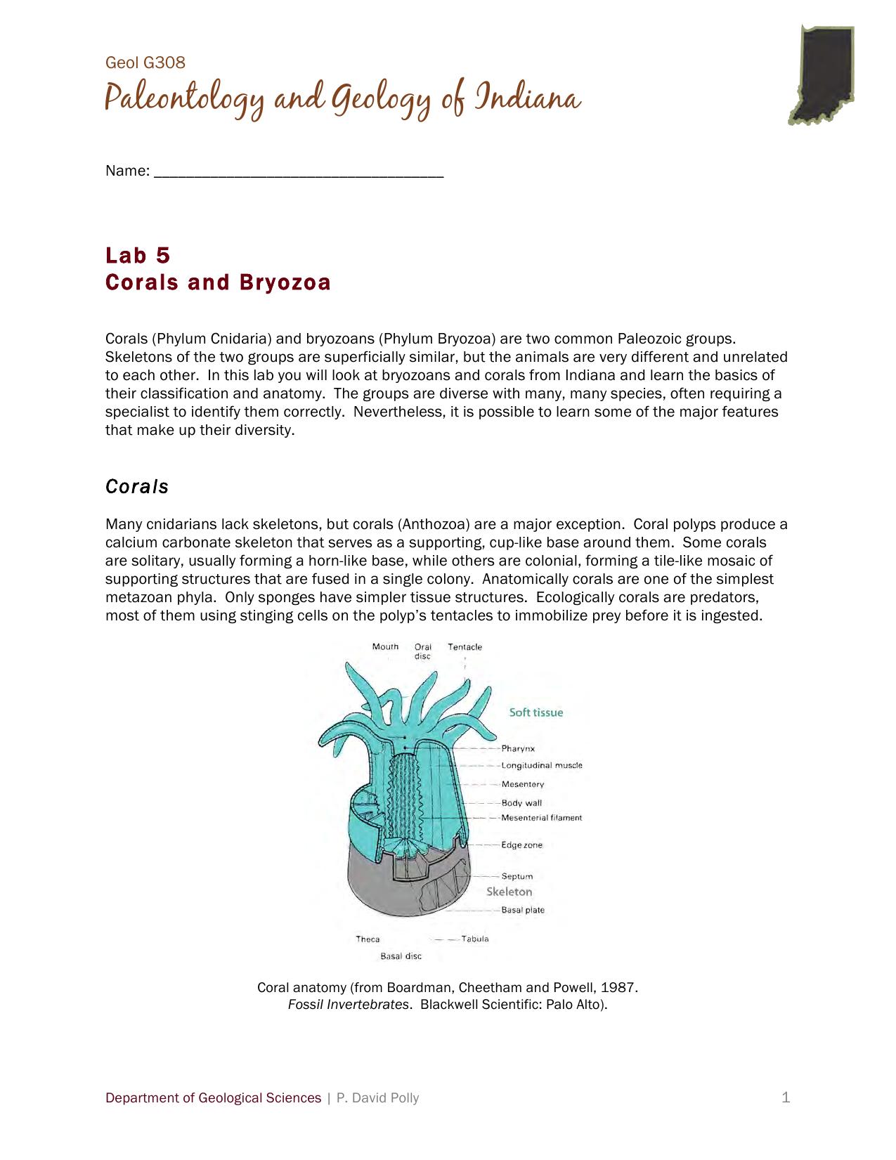 Bryozoans And Corals