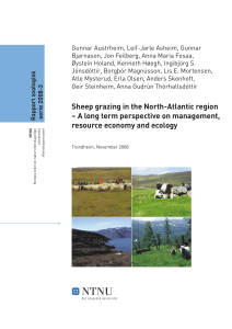 Sheep grazing in the North-Atlantic region