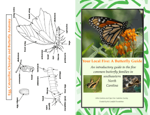 A Butterfly Guide - Cape Fear Audubon Society