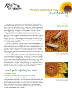 Managing Insect Pests of Texas Sunflowers 2009 E-579