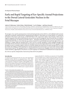 Early and Rapid Targeting of Eye-Specific Axonal Projections to the