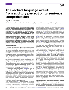 The cortical language circuit: from auditory perception to sentence