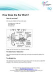 How Does the Ear Work? - Deaf Children Australia