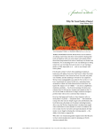 Why We Need Native Plants, Doug Tallamy, 2009 Catalog