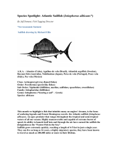 Species Spotlight: Atlantic Sailfish