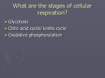 Cell respiration powerpoint cellular_respiration_