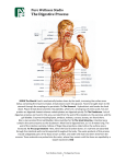 The Digestive Process - Pure Wellness Studio Inc.