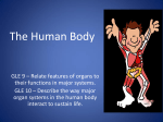 The Human Body - Riverdale Middle School