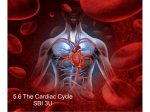 3U 5.6 The Cardiac Cycle PDF
