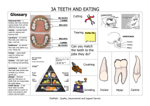 3A TEETH AND EATING