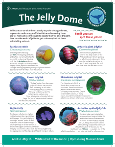 Jelly Dome Visitor Guide