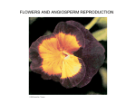 FLOWERS AND ANGIOSPERM REPRODUCTION