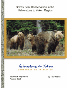 Grizzly Bear Conservation in the Yellowstone to Yukon
