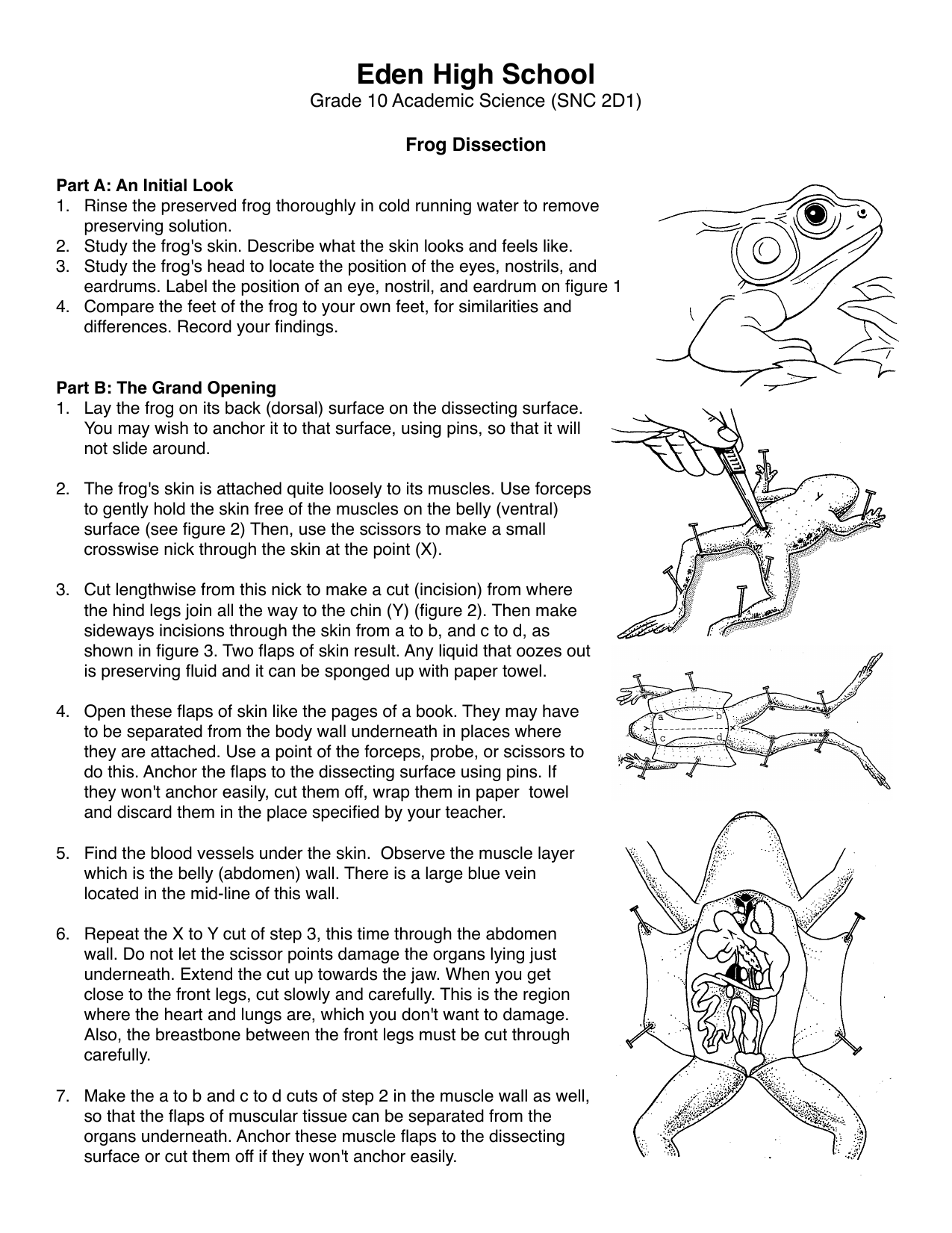 bio ho frog dissection Frog Dissection Worksheet Activity