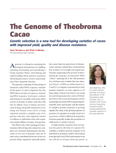 The Genome of Theobroma Cacao
