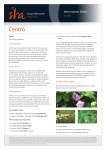 Centro - Sugar Research Australia