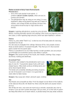 Plants to Avoid in Early Years Environments Philodendron One of