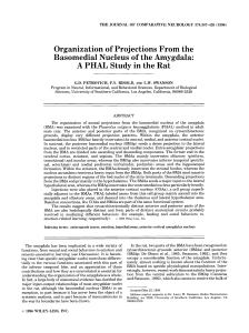 Organization of projections from the basomedial nucleus of the