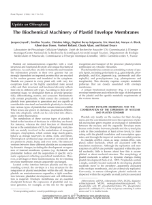 The Biochemical Machinery of Plastid Envelope