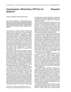 Cytoskeleton: What Does GTP Do for Septins? Dispatch