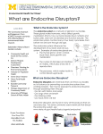 What are Endocrine Disruptors?