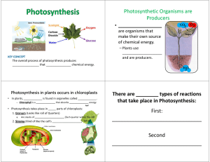 Photosynthetic Organisms Photosynthetic Organisms are are