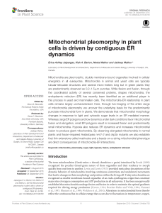 Mitochondrial pleomorphy in plant cells is driven