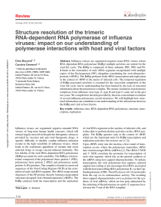 Structure resolution of the trimeric RNA